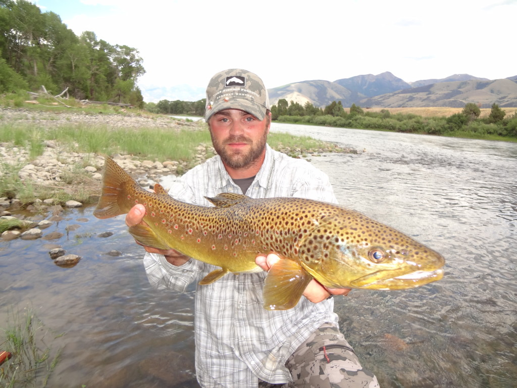 Yellowstone River Brown